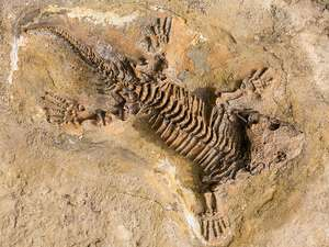 fosil nedir