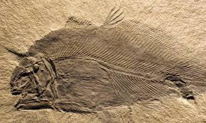 balık fosili