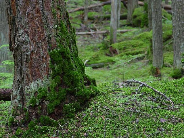 ağaç ve aş yosunları ile yön bulma